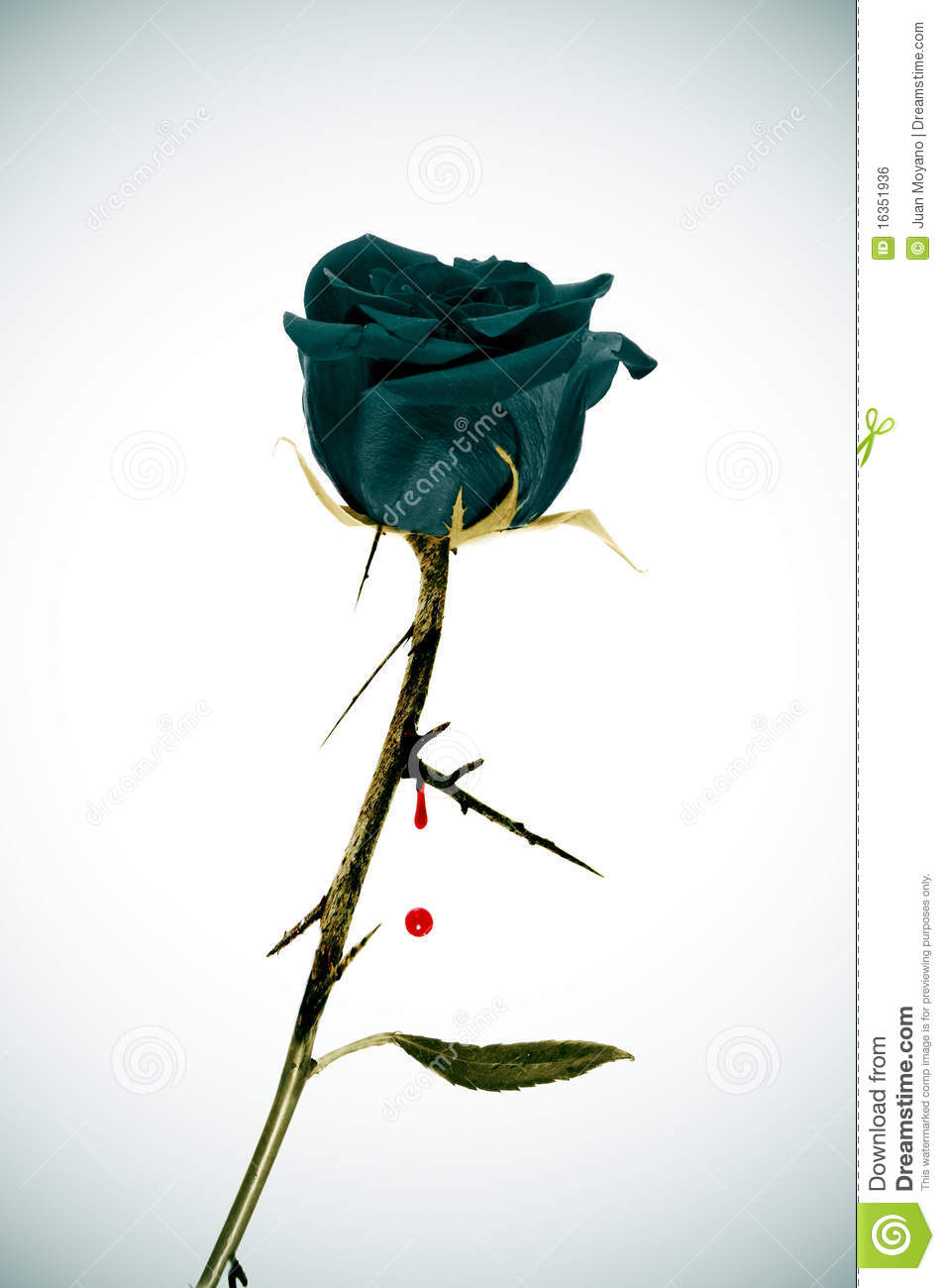 Emo rose royalty free stock image image 16351936 - Emo rose pictures ...