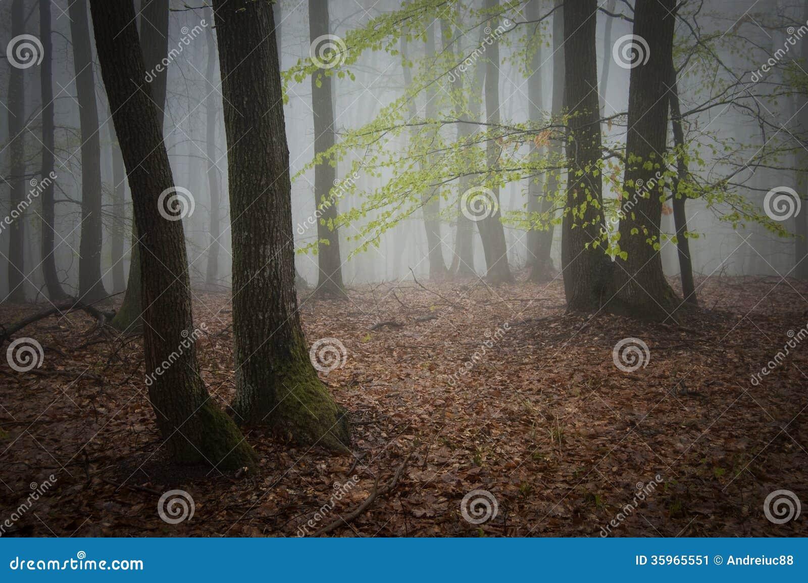 Empáñese en un bosque después de lluvia en verano
