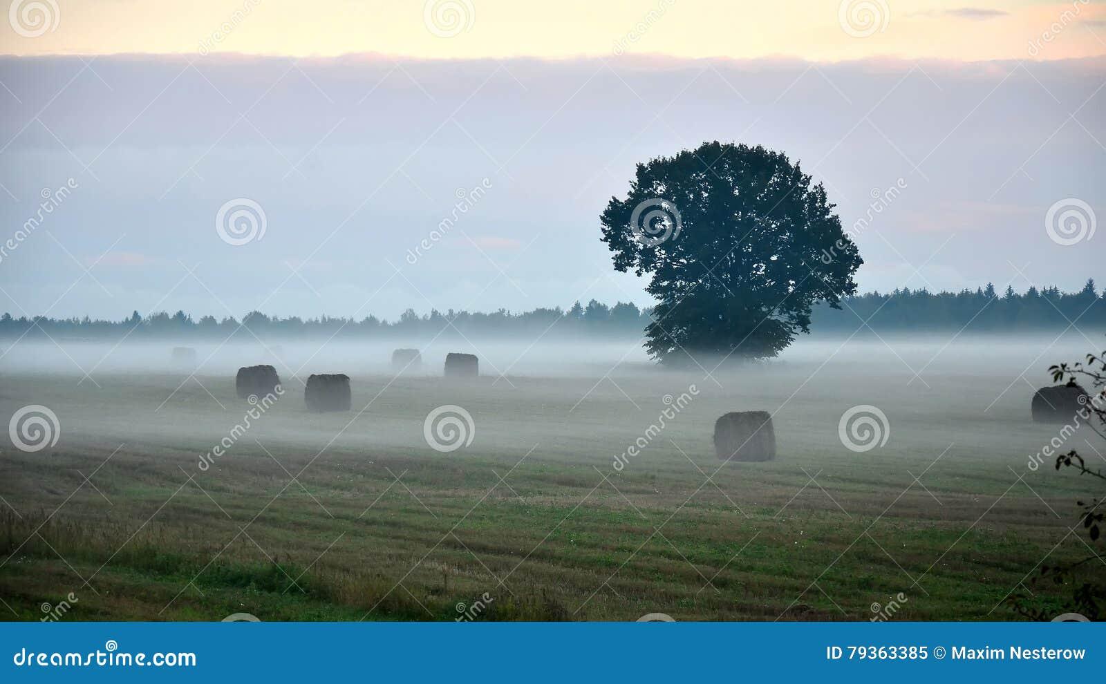 Empáñese por la tarde en el campo del pueblo