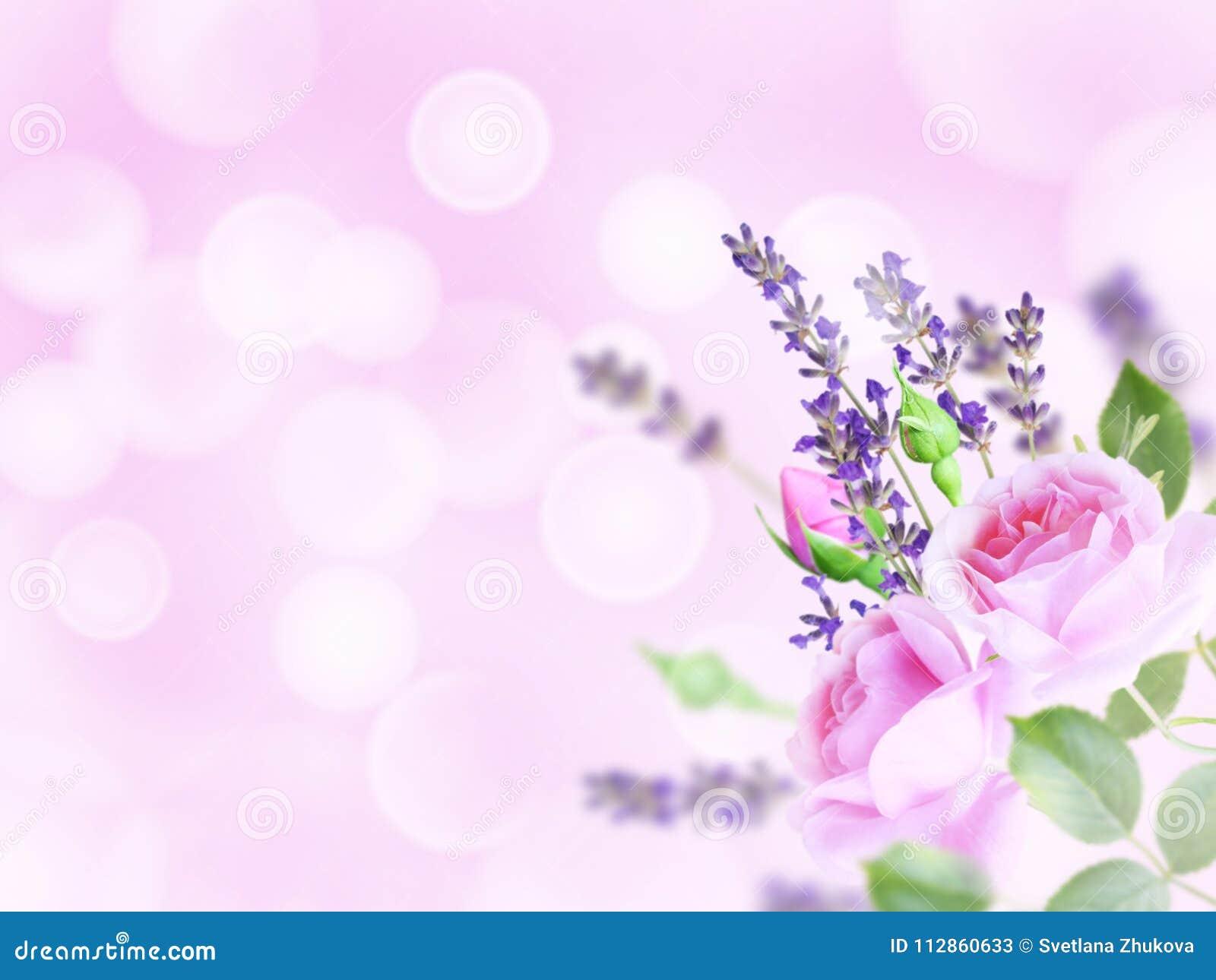 Empalideça - rosas e alfazema cor-de-rosa no canto do backgr borrado