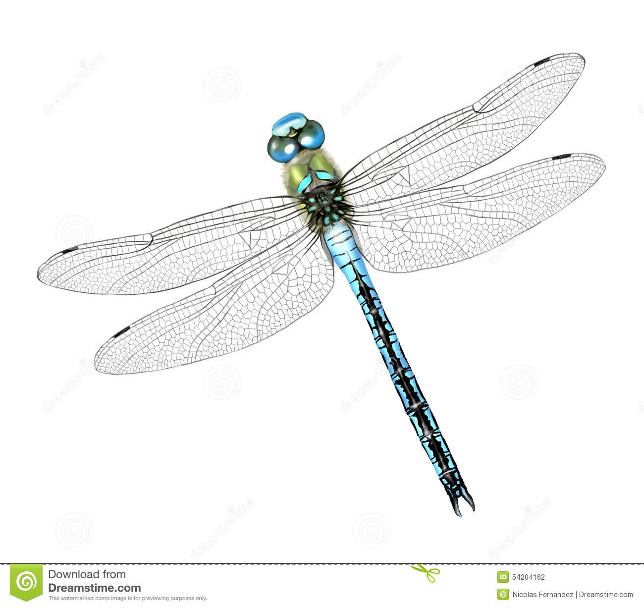 Dragonfly Illustration moreover Snoop Dogg further 02012005 1 as well Extra Prints in addition Drawing Cartoon Dogs Step Step. on dog drawings pictures