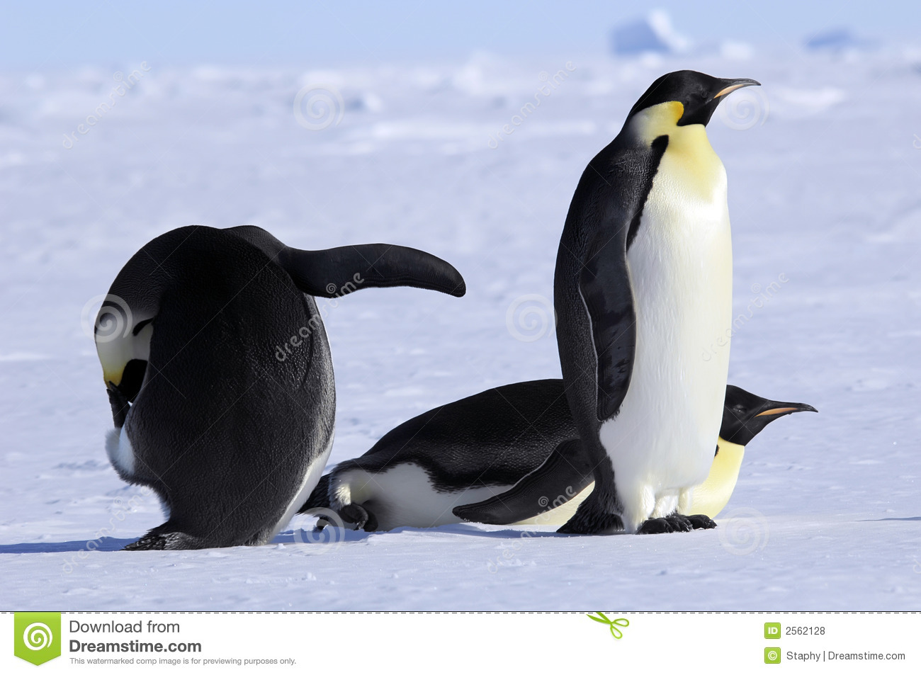 Emperor Penguin Group Royalty Free Stock Photos - Image ... Penguin Group