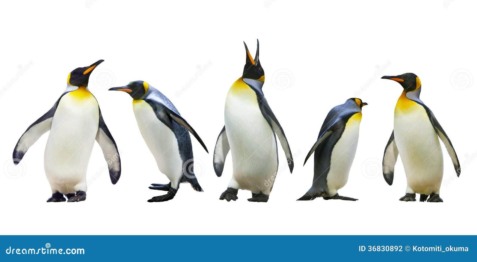 penguins of madagascar christmas wallpaper