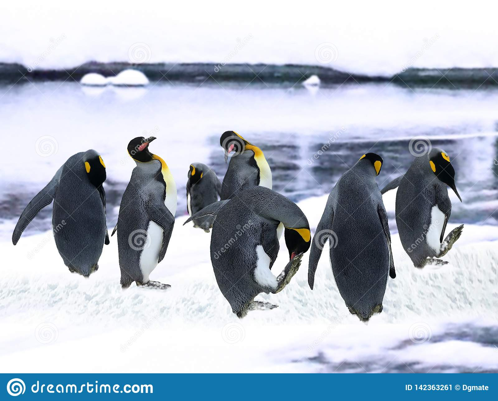 Emperor Penguins in the snow