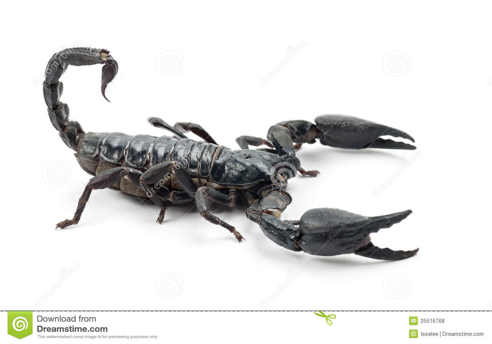 Emperor Scorpion Pandinus Imperator on Green Leaf Vector Free