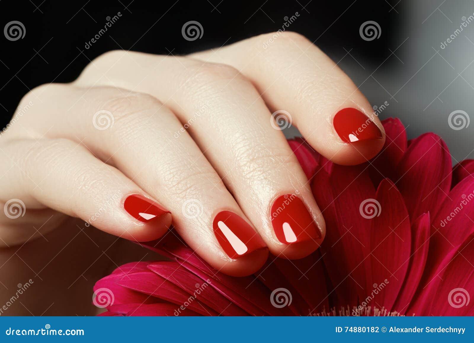 Empfindliche Hände der Schönheit mit der Maniküre, die rosa Blume hält, schließen u