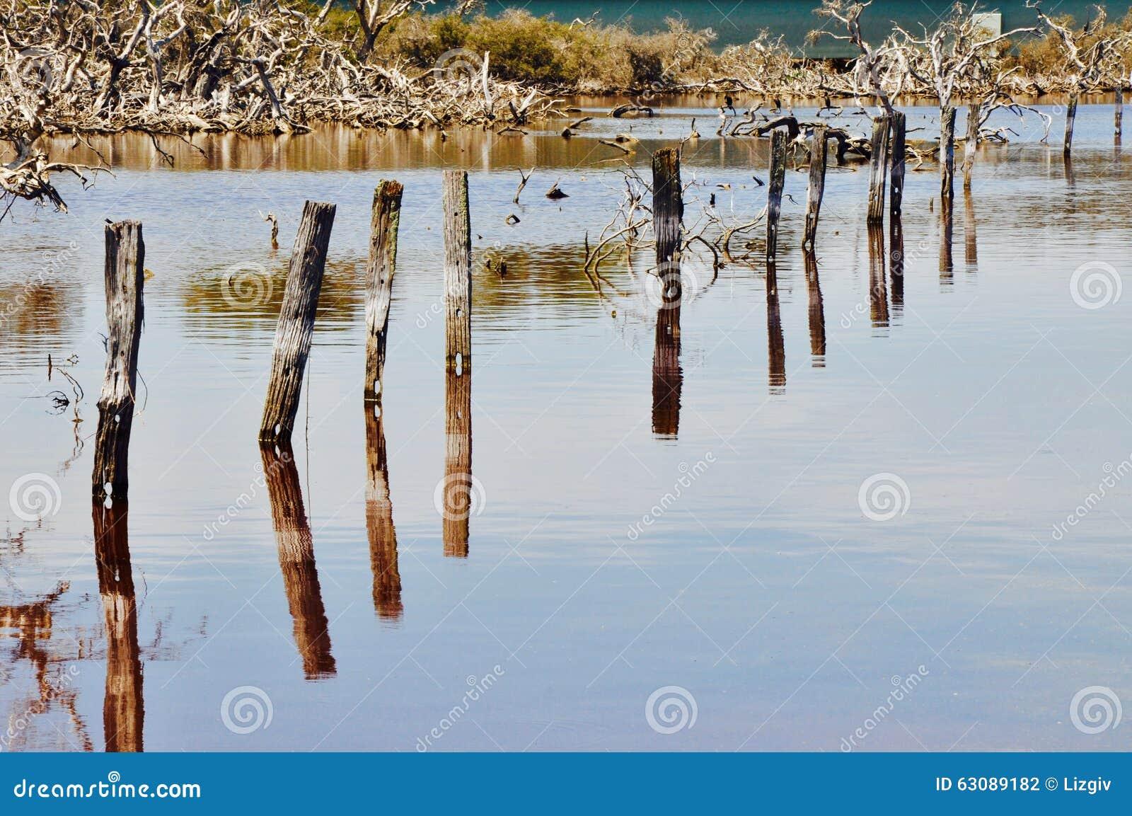 Download Empilages Dans La Perspective : Lac Coogee, Australie Occidentale Photo stock - Image du marécages, marécage: 63089182