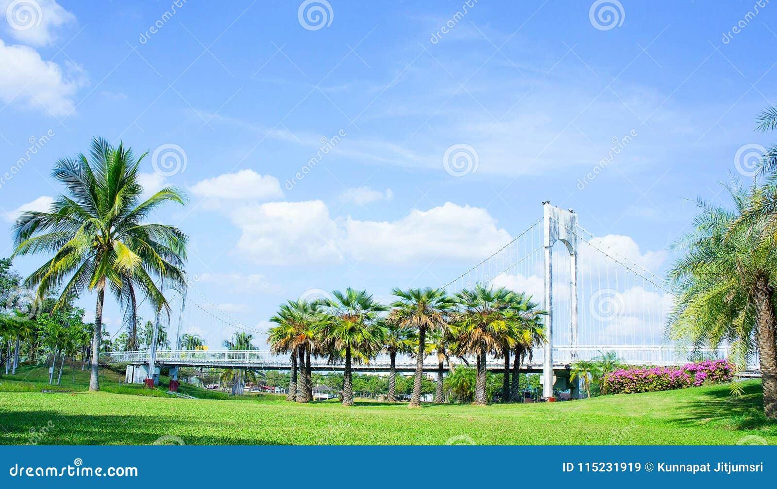 Emplacement dans le parc, le pont et les paumes extérieurs en parc