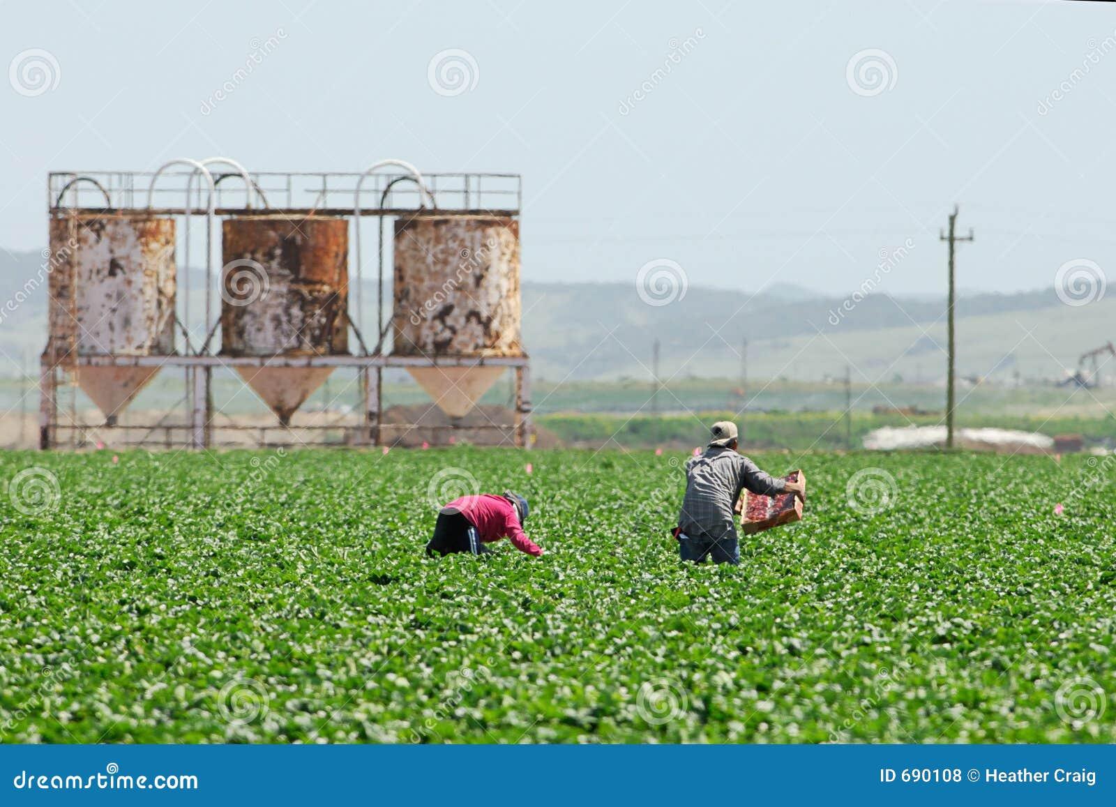 Empregados de fazenda emigrantes em Califórnia