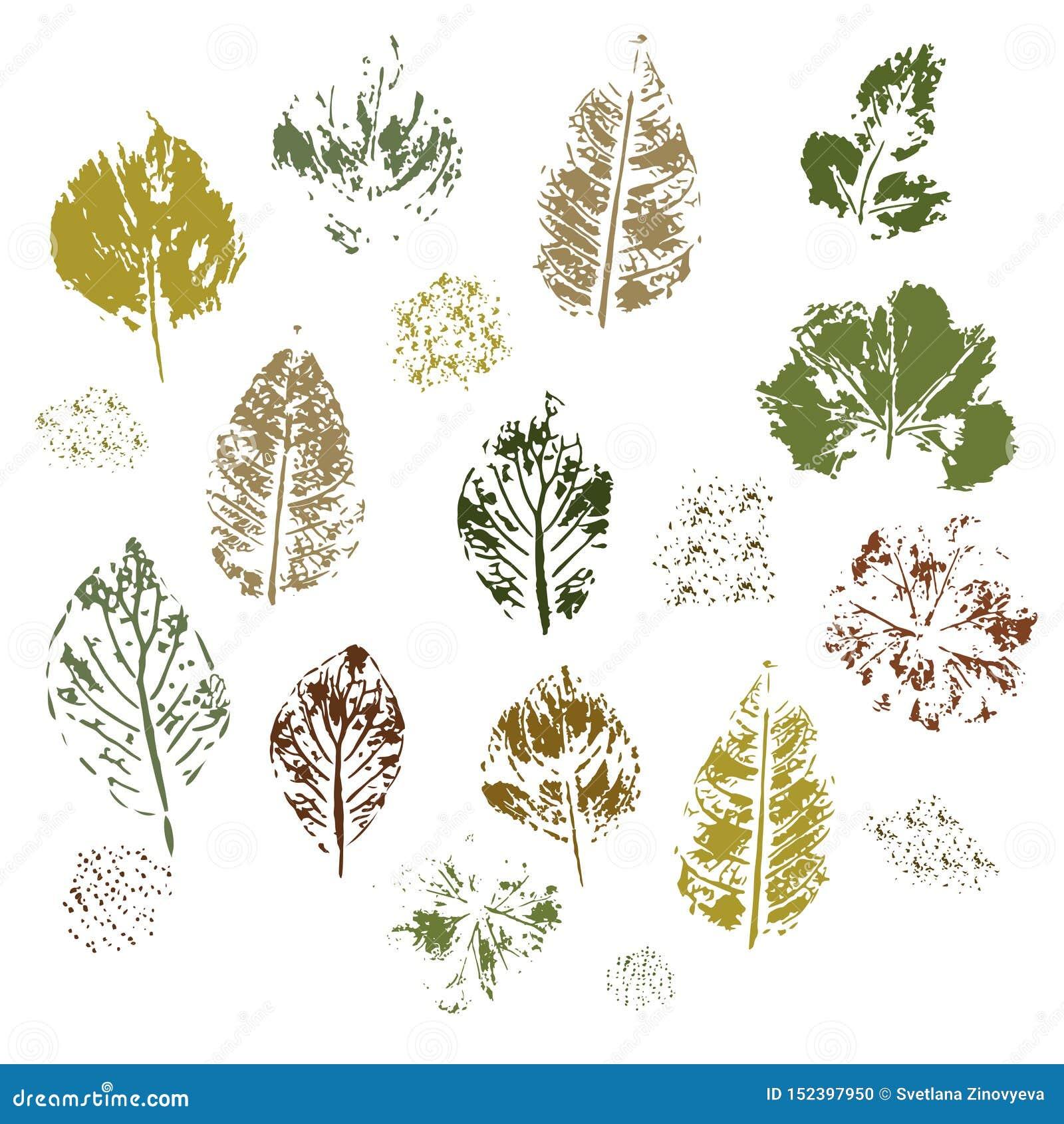 Empreinte de différentes feuilles sur un fond blanc Vecteur