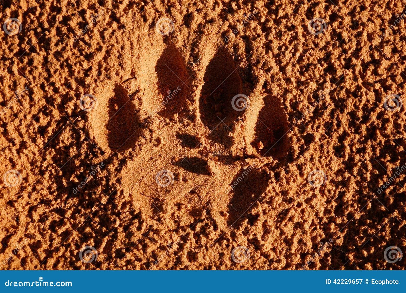 Empreinte de patte de lion photo stock image 42229657 - Patte de lion ...