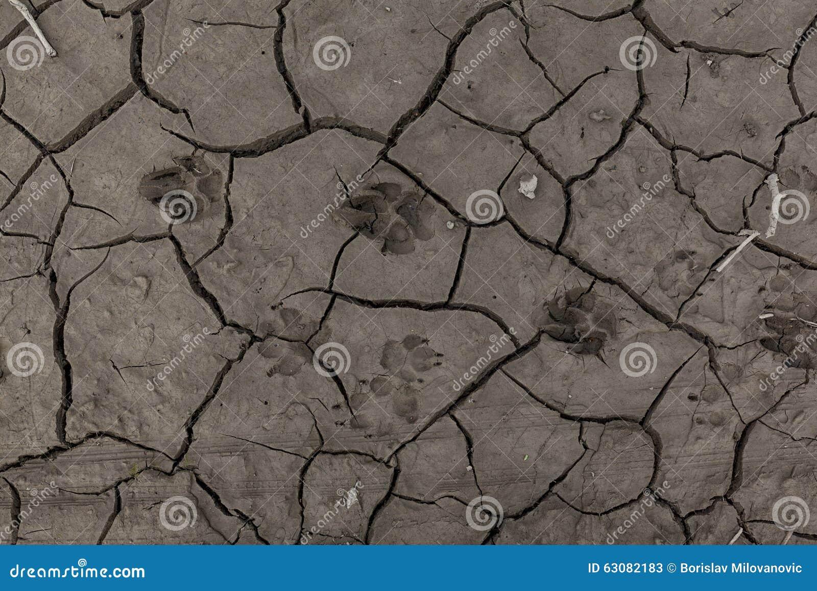 Download Empreintes De Pas Animales Dans La Boue Sèche 01 Image stock - Image du brun, gris: 63082183