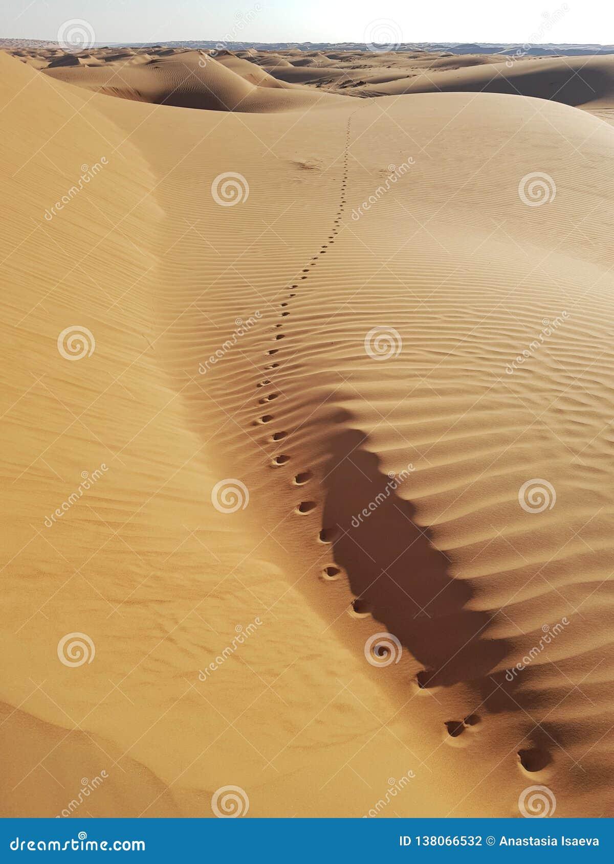 Empreintes de pas de chameau allant abandonner l horizon