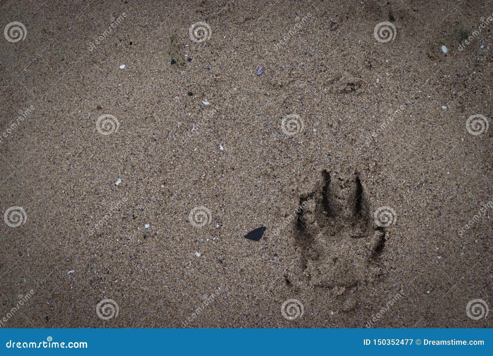 Empreintes de pas de chien dans le sable
