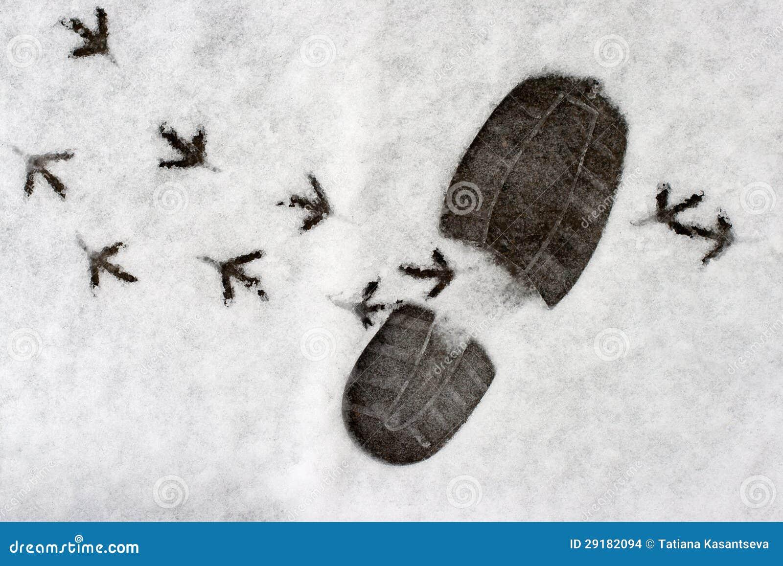 crottes de chamois pictures - photo #23