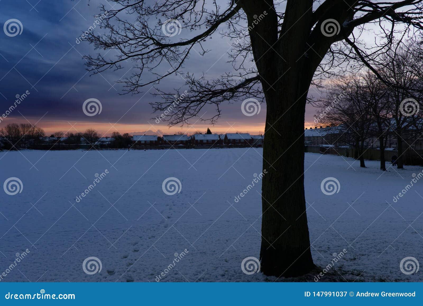 Empreintes de pas par un arbre d hiver