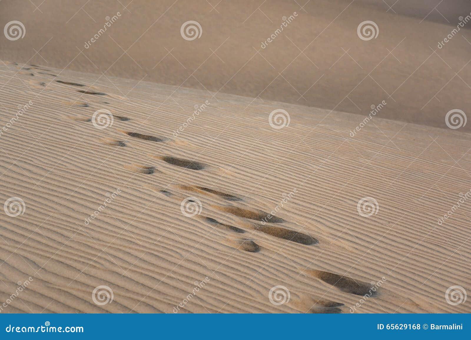 Empreintes de pas sur des dunes de sable, différentes textures, Maspalomas, mamie Canaria, Espagne