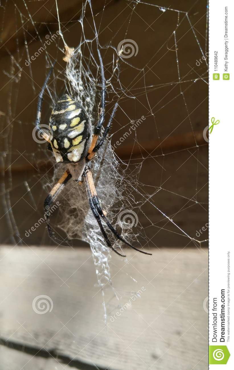 Empress Spindle The Garden Spider Stock Photo - Image of prime ...