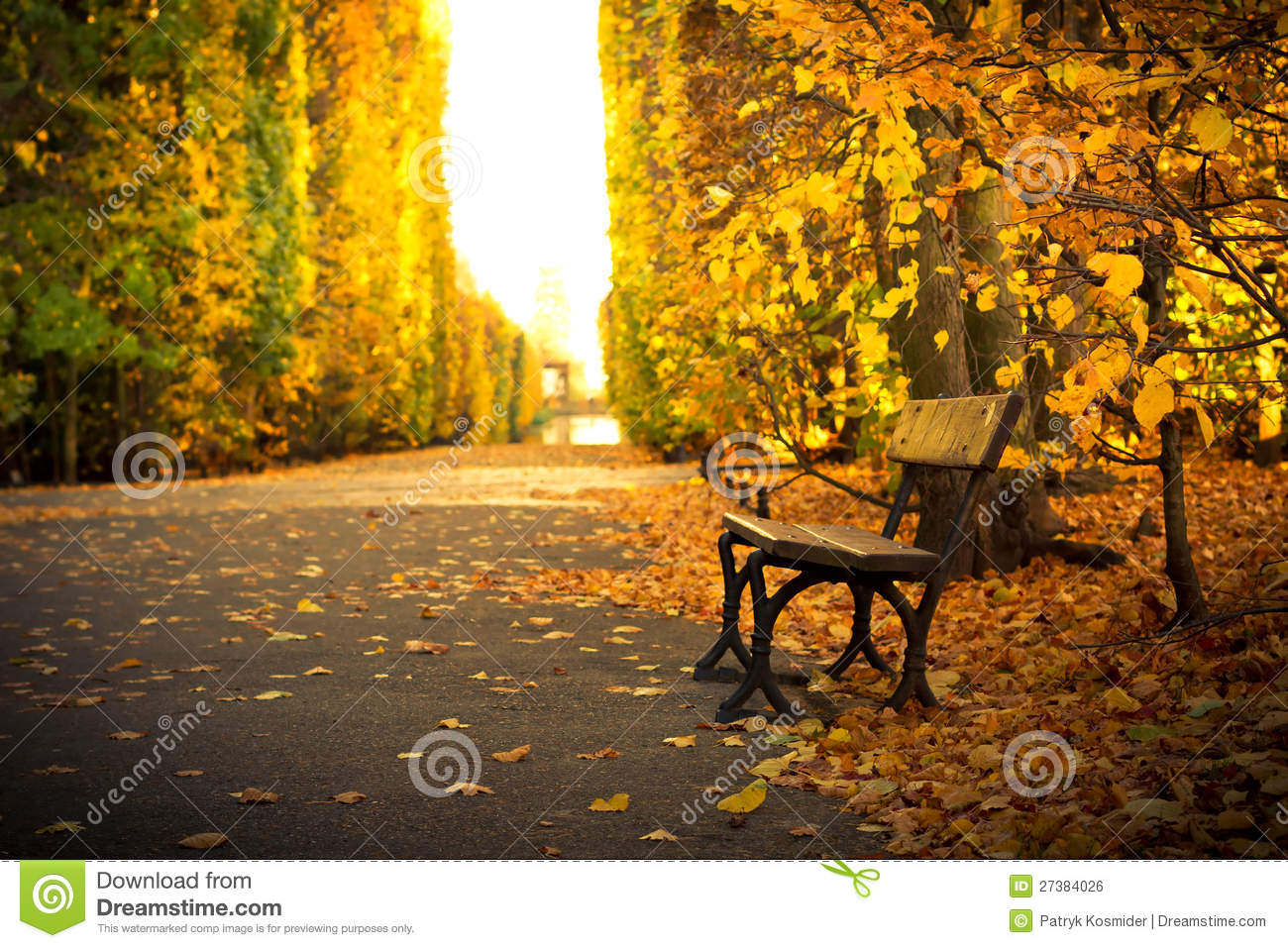 Empty Bench In Beautiful Yellow Park Scenery Royalty Free Stock Image ...