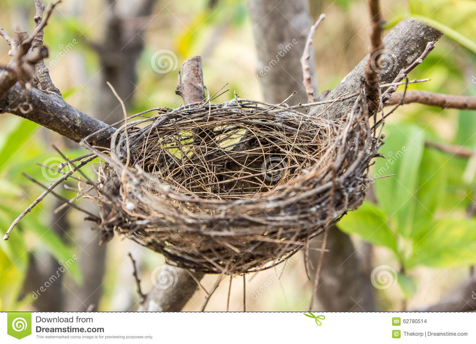 Nature Images 2mb: Empty Bird's Nest Stock Photo
