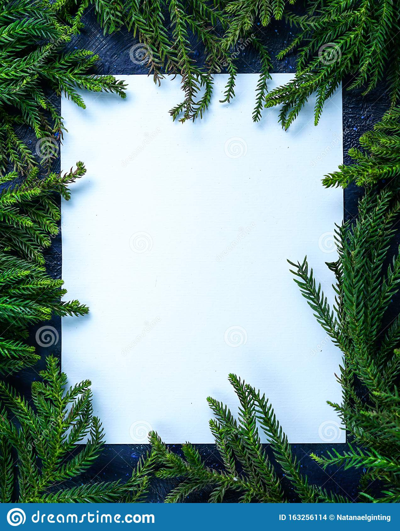 Empty Blank Card Surrounded By Christmas Tree Branches ...
