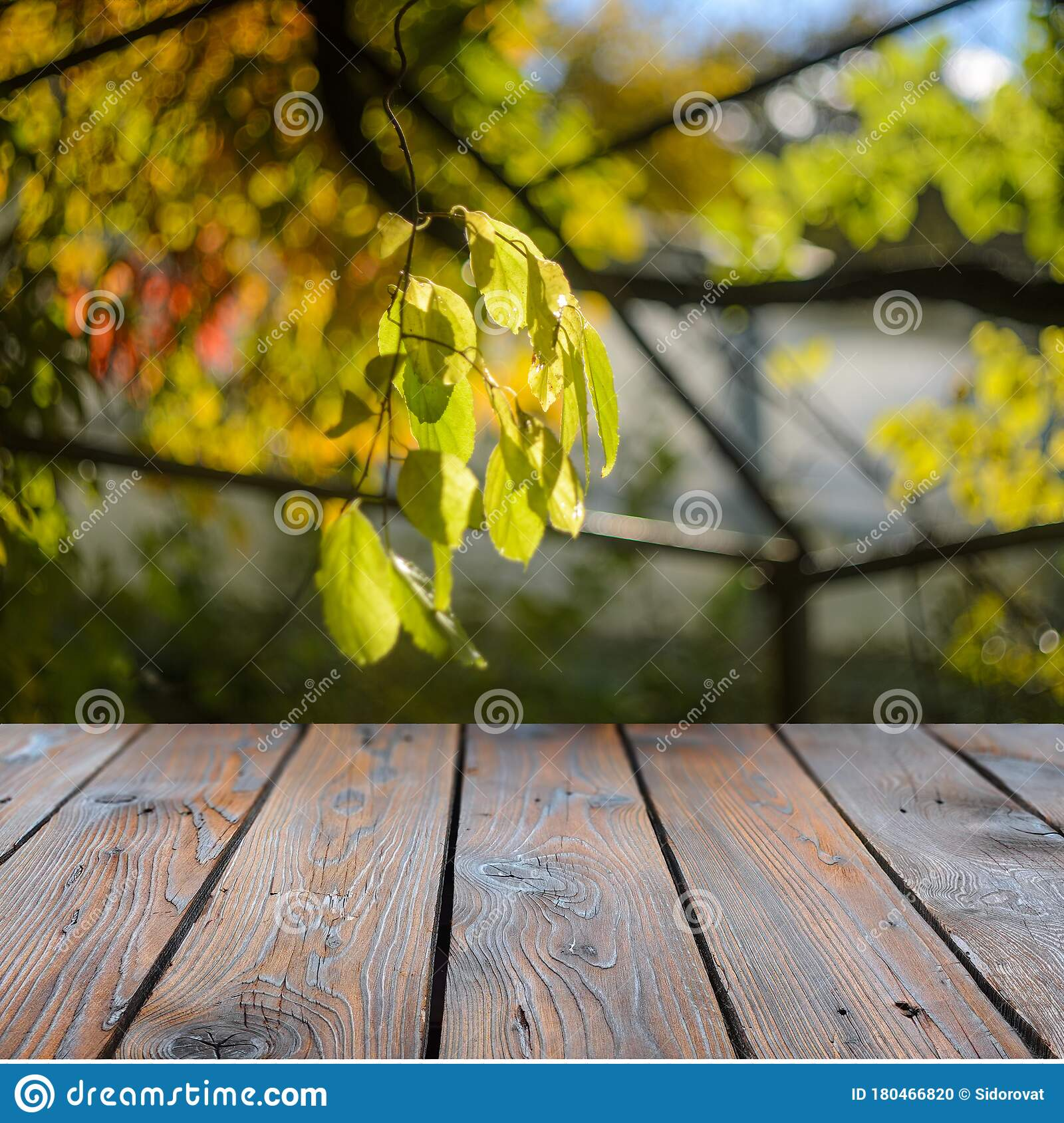Empty Dark Wooden Table With Backlit Tree Branch Hanging Over It Stock Photo Image Of Festive Environment 180466820