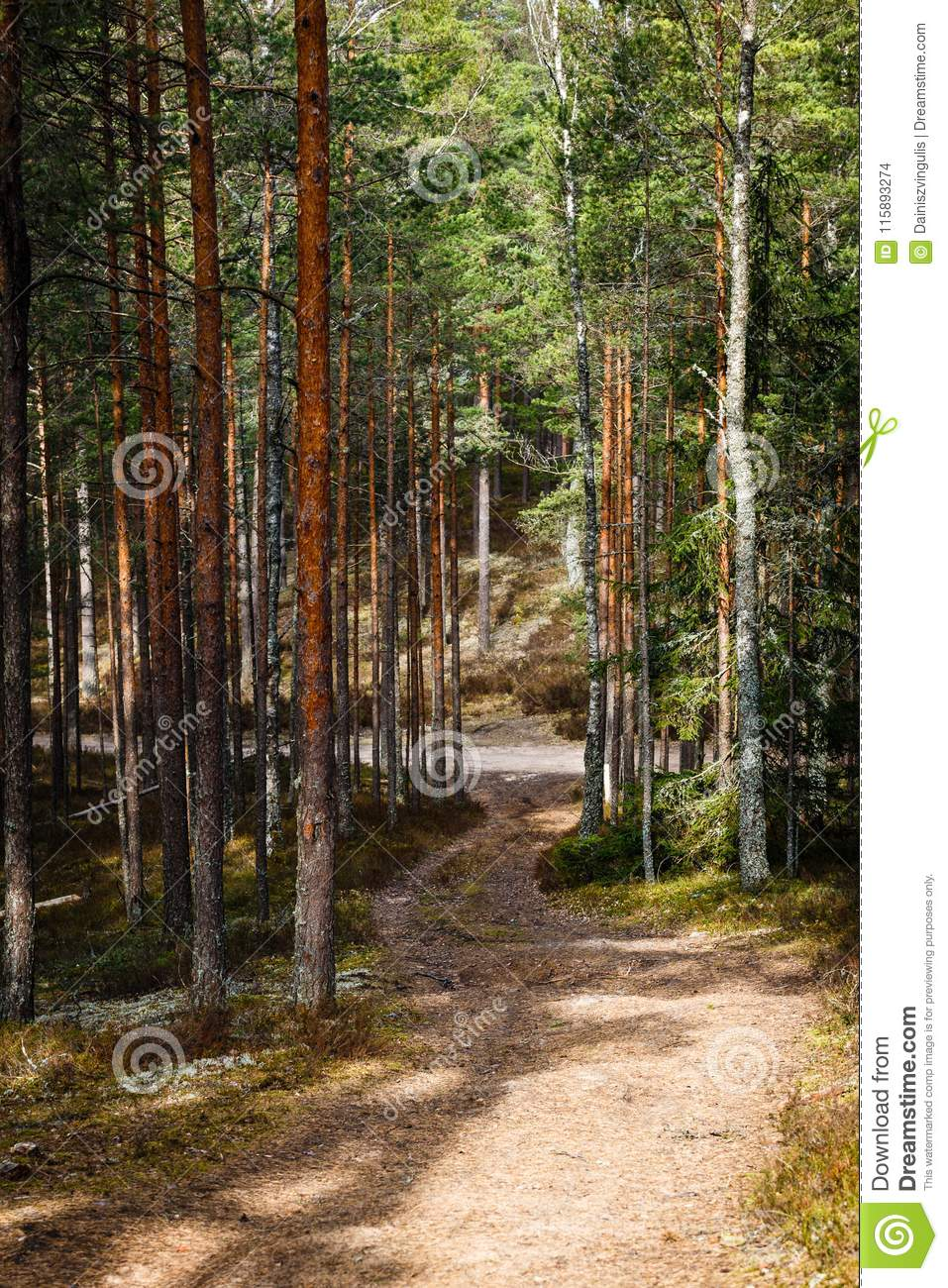Empty forest path which goes to a larger gravel forest path