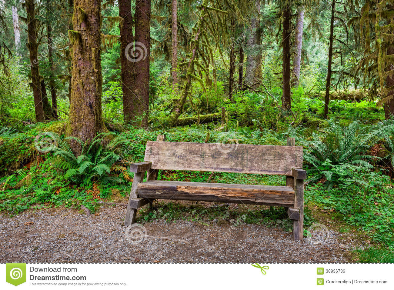 Empty Log Bench In The Forest Stock Photo Image Of