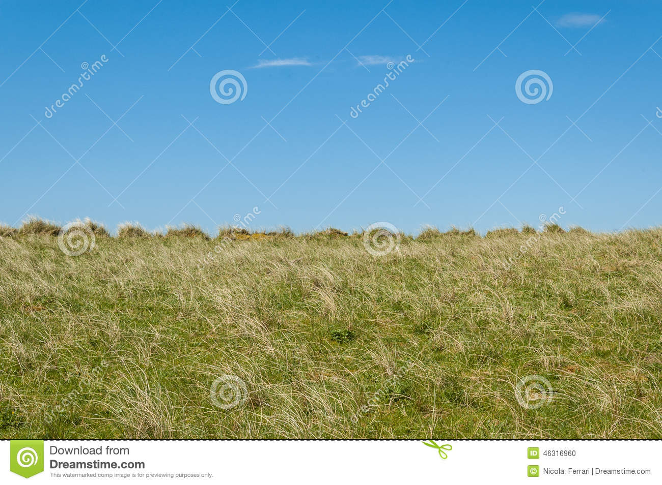 Empty long grass field with blue sky in the background.