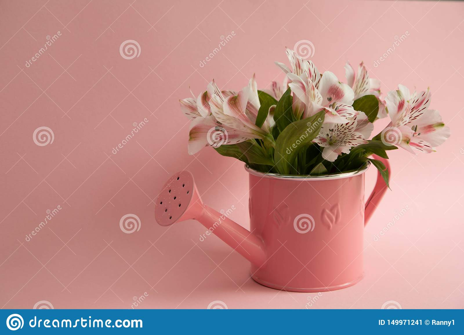 Empty pink watering can and three crimson gerbera flowers lying diagonally. Three red flowers and an empty watering can on a