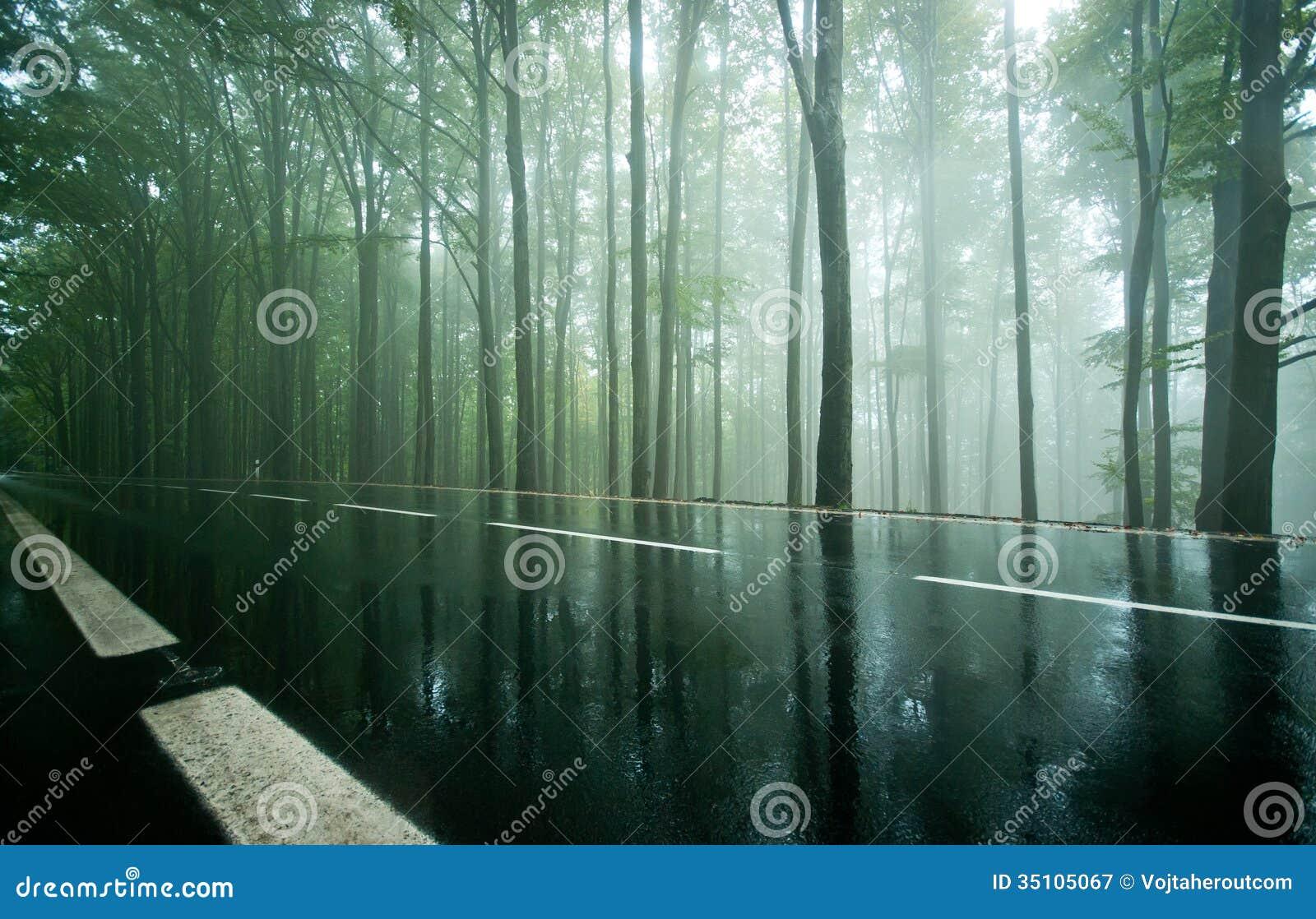 Beech Forest wallpaper