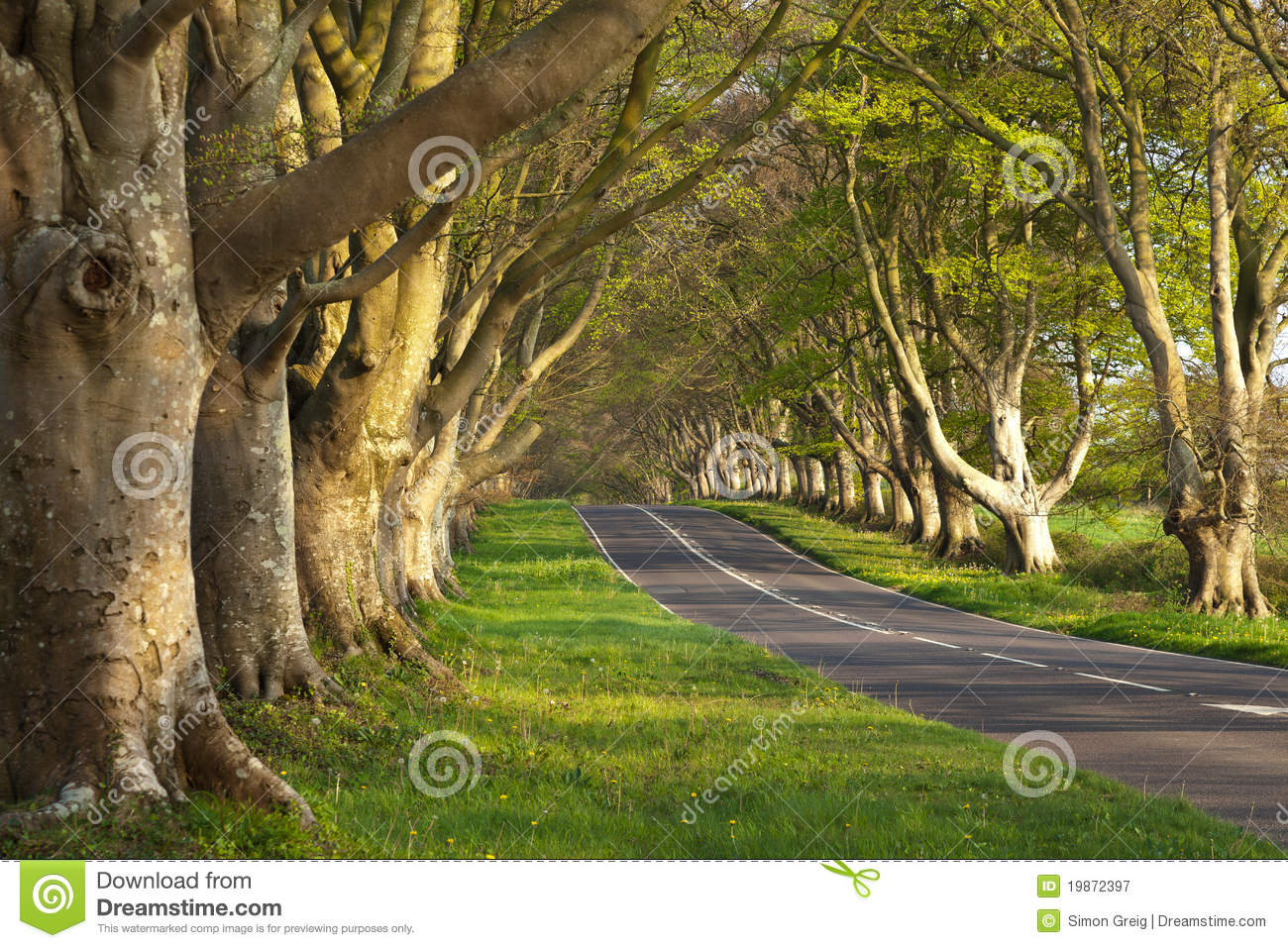 Empty Road Between The Trees Royalty Free Stock
