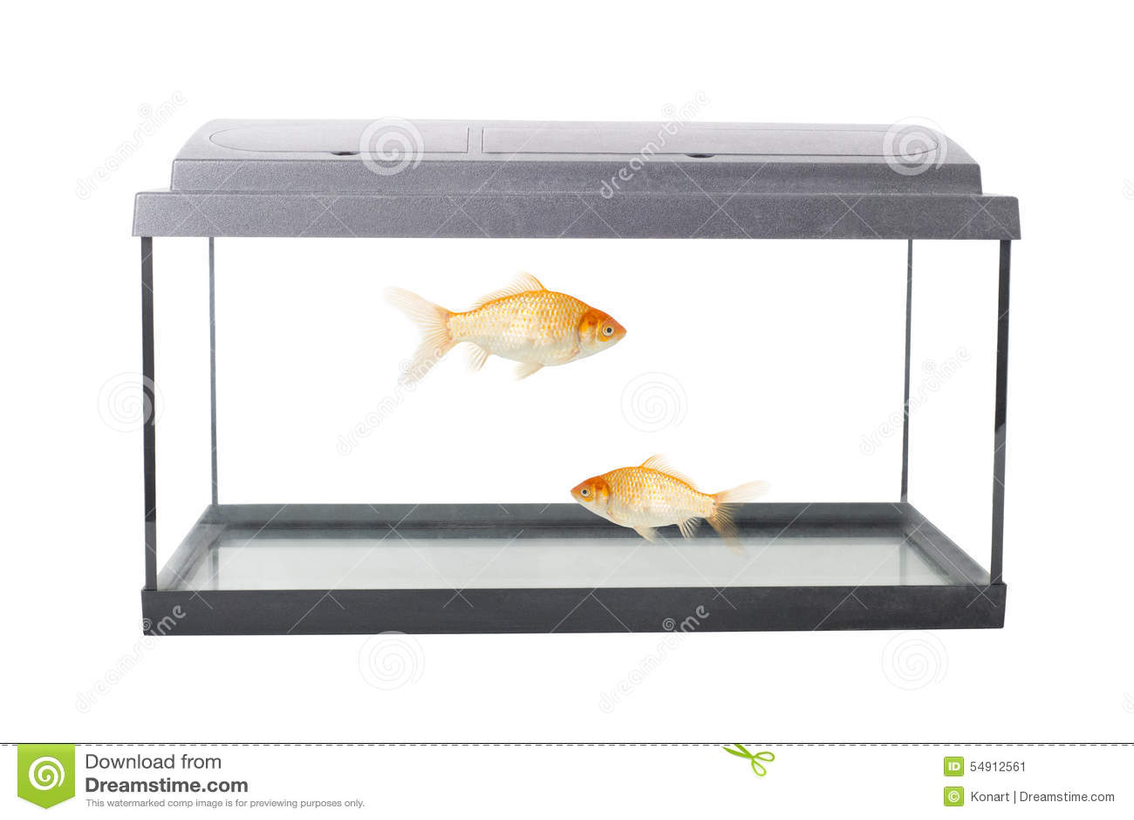 Empty squared fish tank stock photo image 54912561 for Empty fish tank