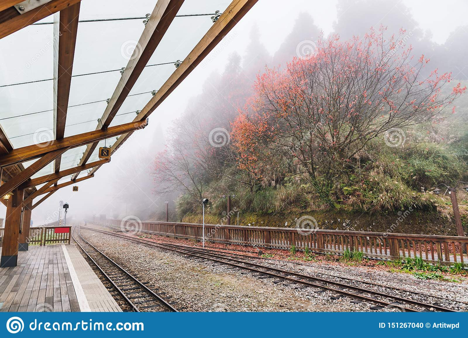 Empty train rails in Alishan Forest Railway stop on the platform of Zhaoping railway station with trees and fog in the background