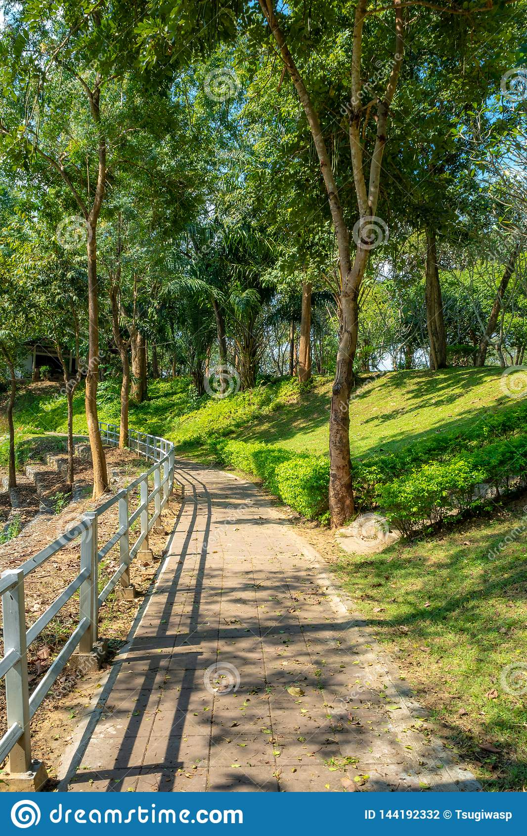 Empty walkway with wooden rails and lush trees with sunlight in park