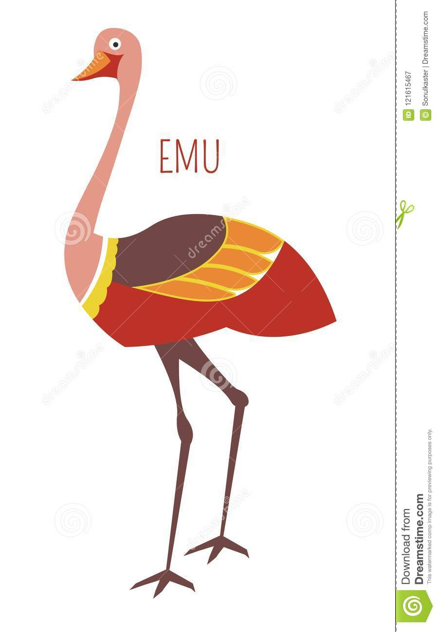 ce63a24d6c2 Emu ostrich cartoon funny cute bird from vector Australian or New Zealand  animals zoo collection for kids T-shirt clothes print