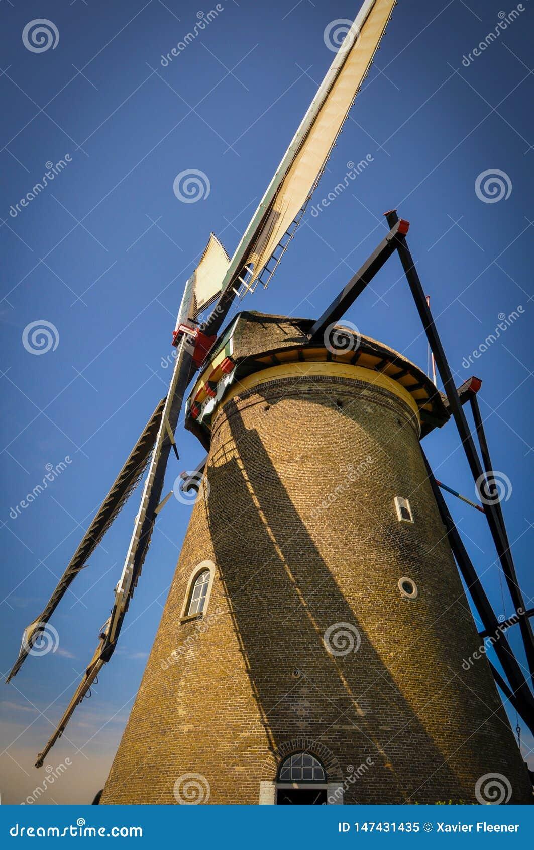 En av det talrikt maler att sv?va p? floderna av Kinderdijk