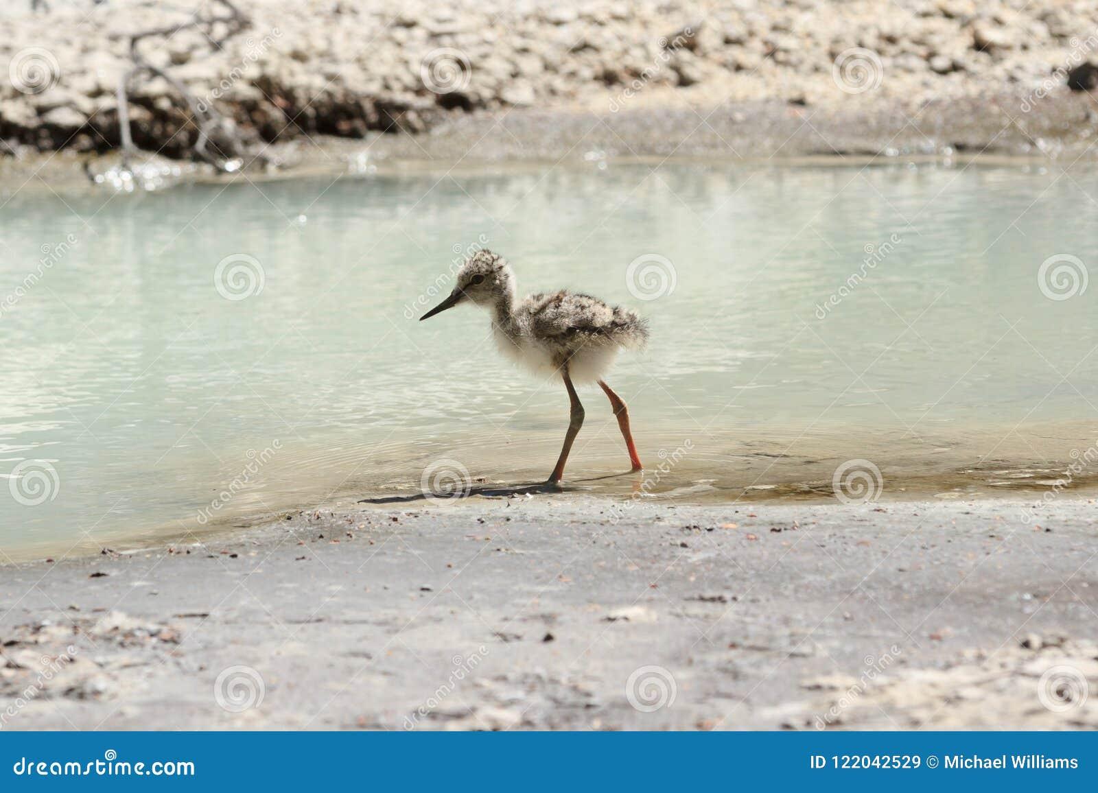 En barnslig pied stylta vid kanten för vatten` s