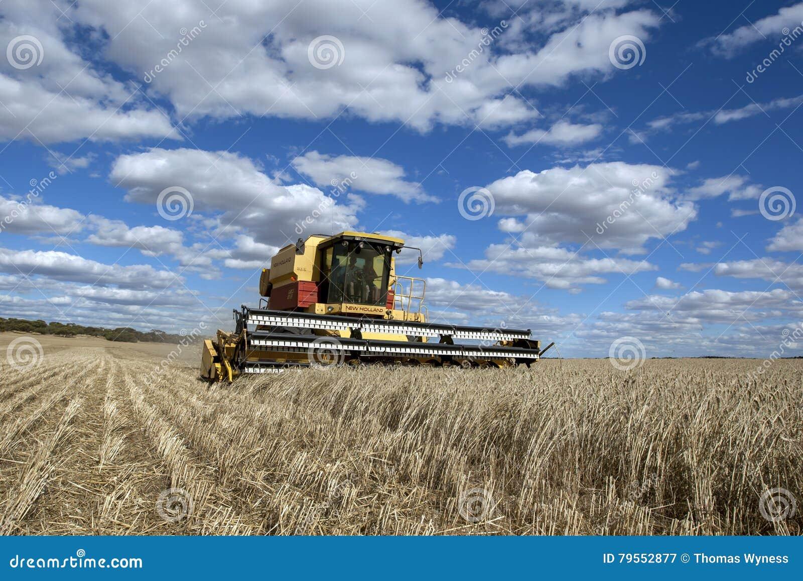En bonde skördar en broadacrepaddock av vete