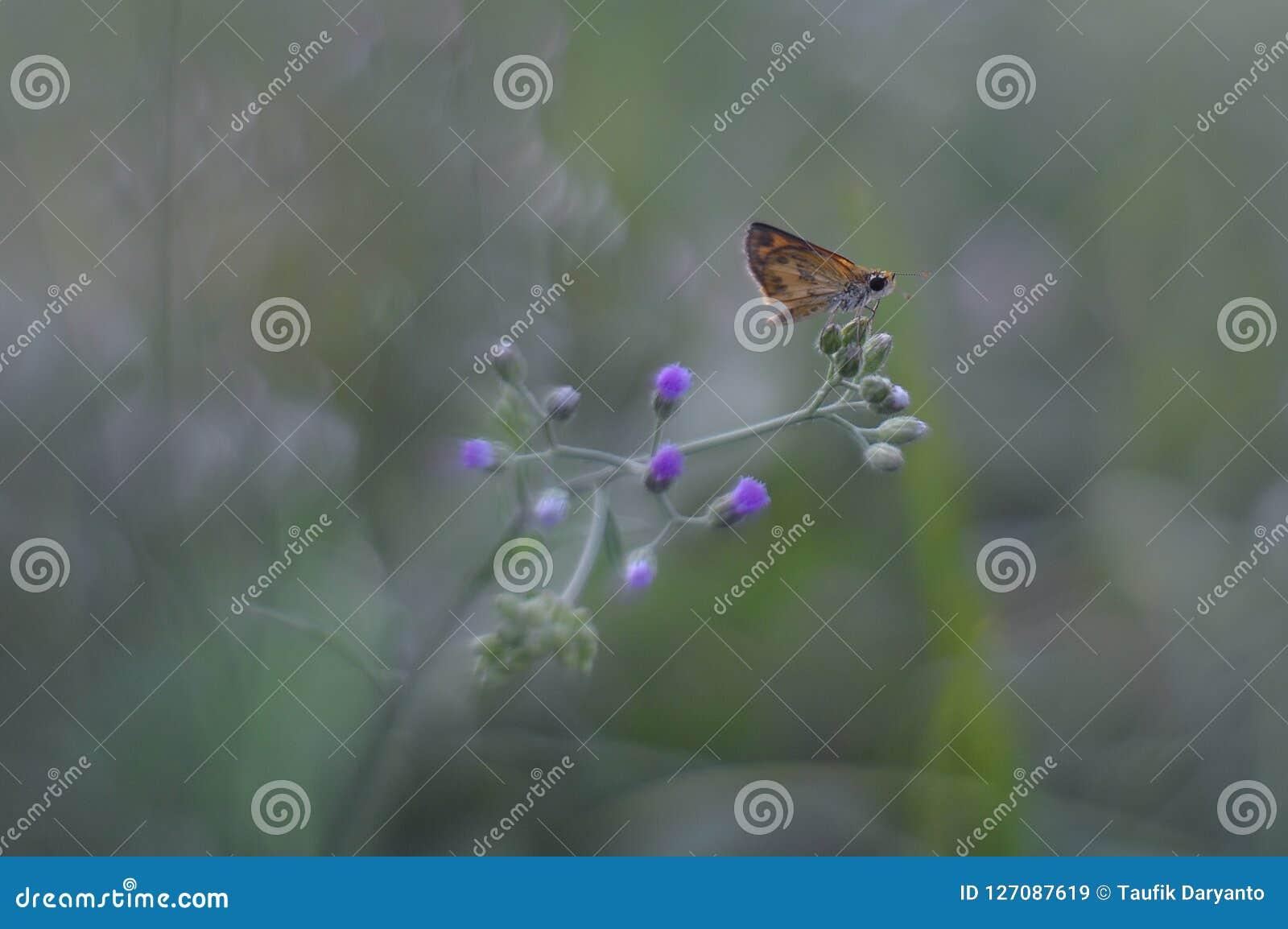 En brun fjäril, en blomma och en mjuk bakgrund