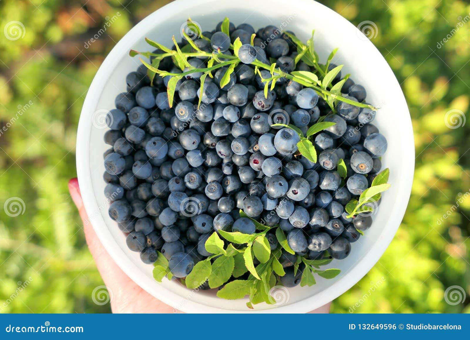 En bunke mycket av lösa blåbär