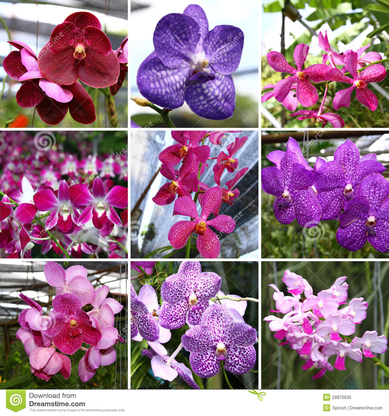 Orchide collage