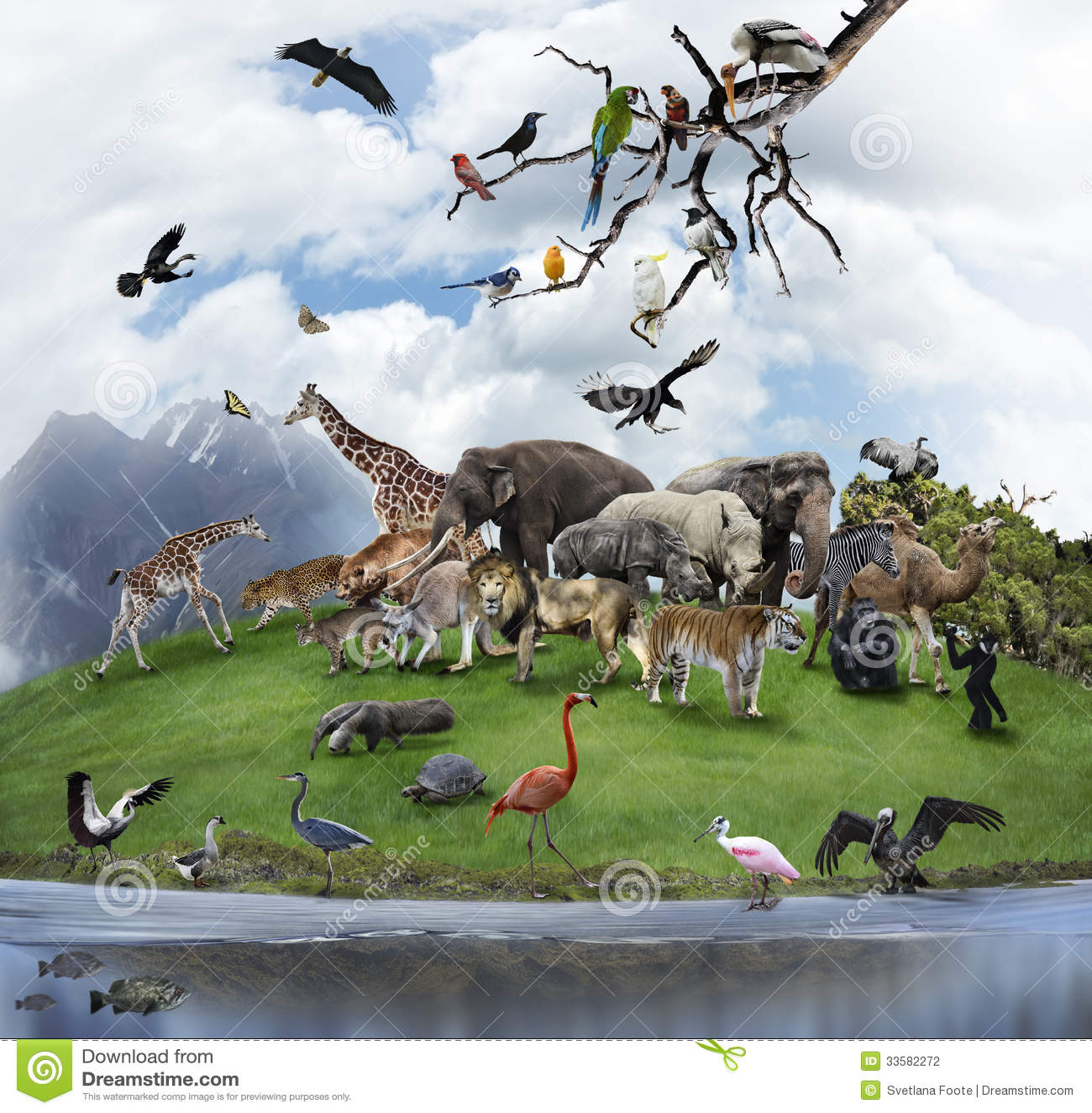 En collage av vilda djur och fåglar