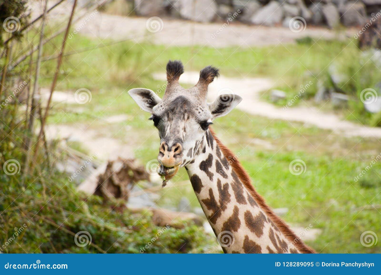 En dag på zooen