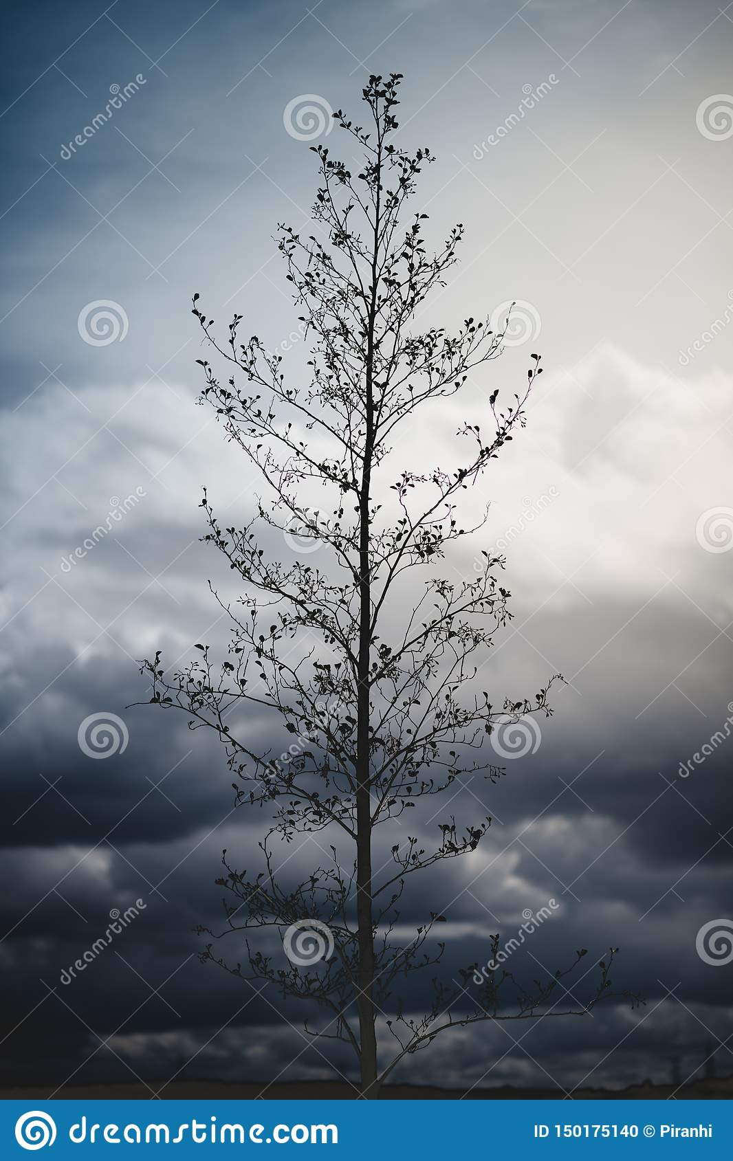 En dramatisk bild av ett högväxt träd som sitter mot lynniga himlar i bakgrunden med blåa och gula signaler