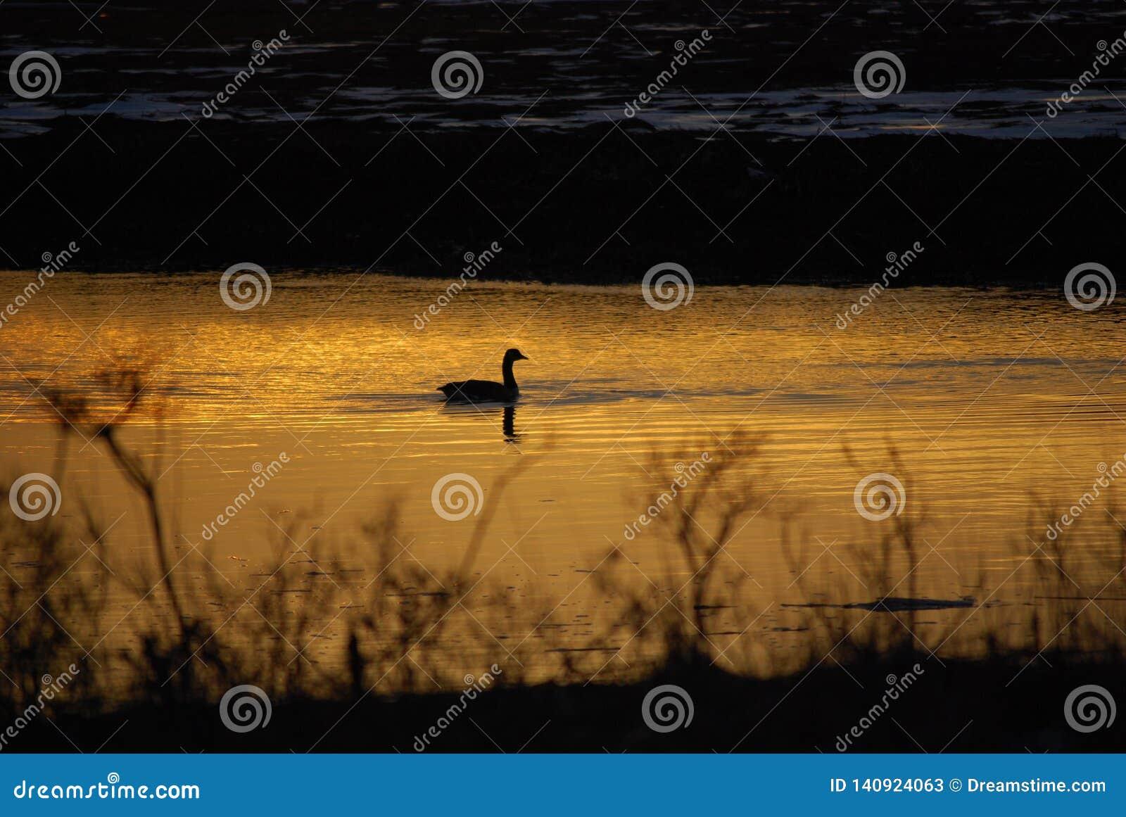 En Duck One Sun