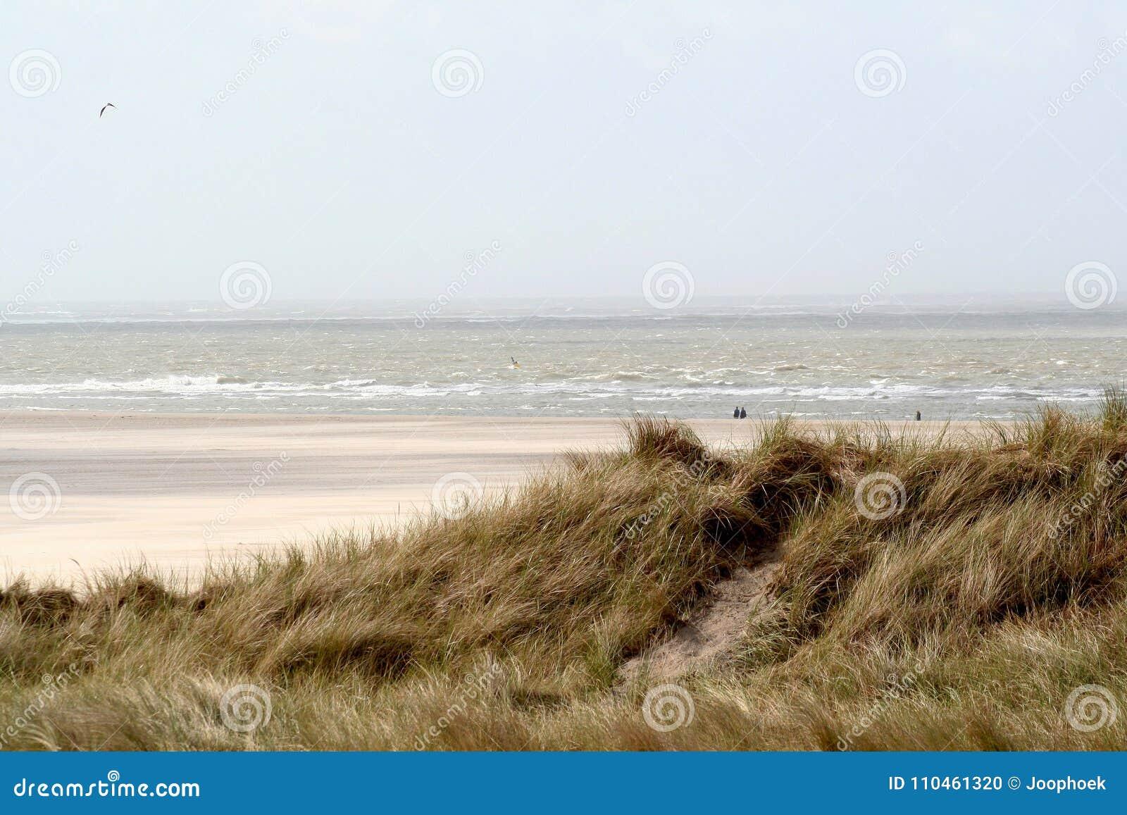 En dyn är en kulle av lös sand som byggs av eoliska processar och, kallas den Ammophila arenariaen, europeiska marramgras, europe