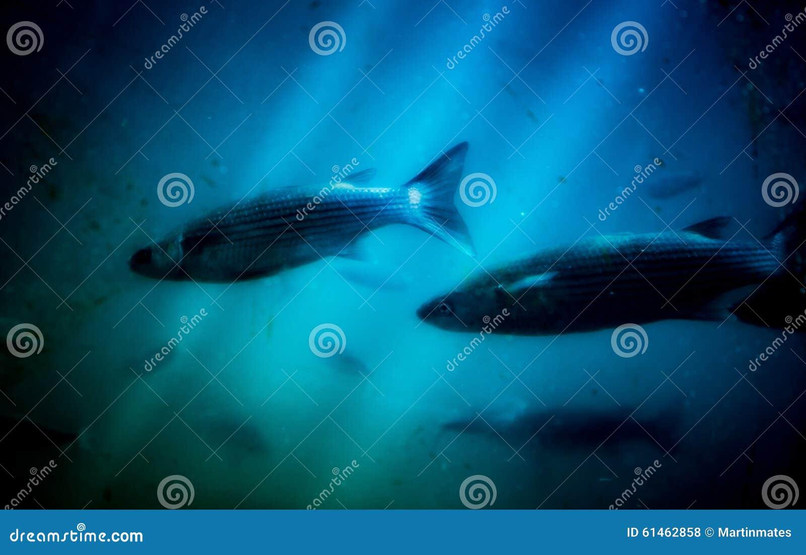 En el submarino