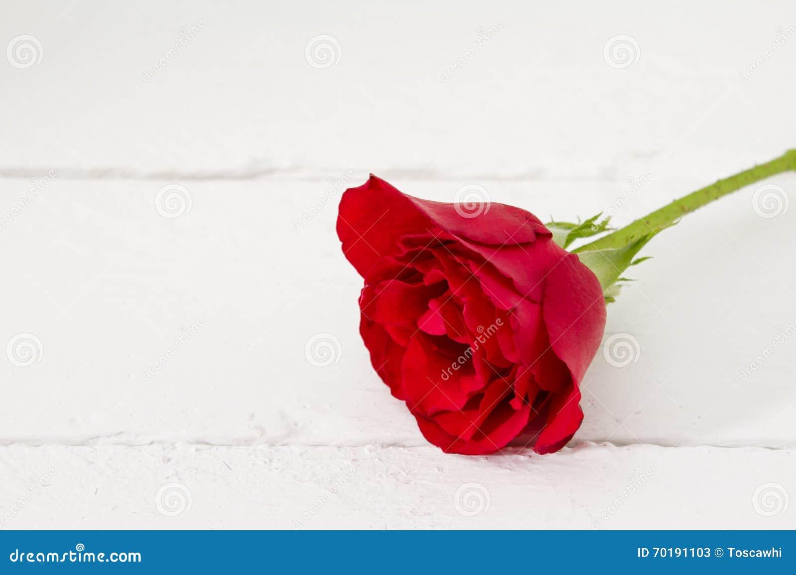 En enkel röd ros som isoleras på vitt trä