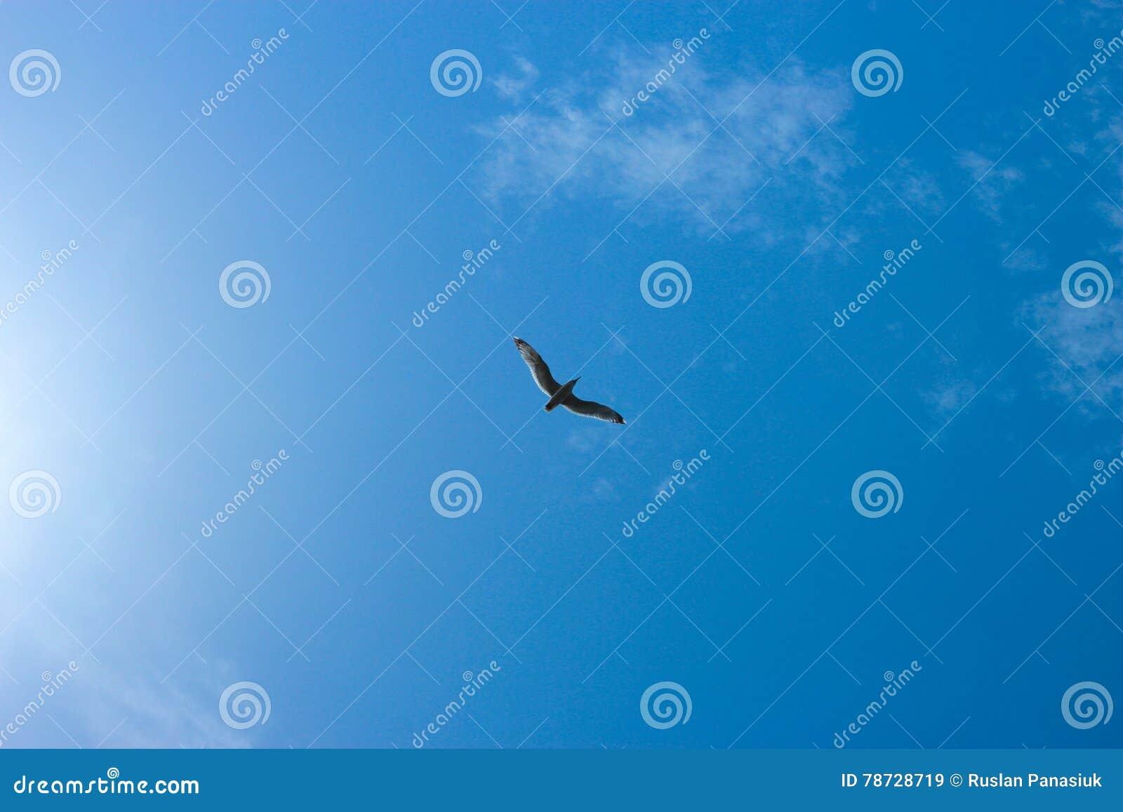 En fågel i himlen